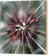 Dandelion Seed Head Wood Print