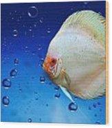 Discus Fish Wood Print