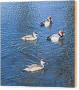4 Duck Pond Wood Print