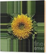 Dwarf Sunflower Named Teddy Bear Wood Print