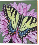 Eastern Tiger Swallowtail Butterfly Wood Print