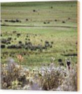 Environmental Tierra Del Fuego -- Wood Print