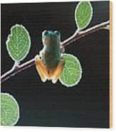 Exotic Frogs Wood Print