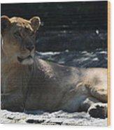 Female Lion Wood Print