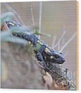 Fire Salamander - Salamandra Salamandra Wood Print