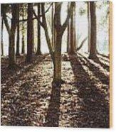 Forest Sunlight Wood Print
