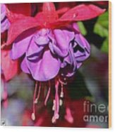 Fuchsia Named Dark Eyes Wood Print