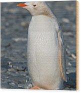 Gentoo Penguin Wood Print