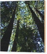 Giant Redwoods Wood Print