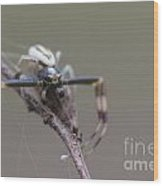 Goldenrod Crab Spider Male  Wood Print