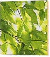 Green Spring Leaves Wood Print by Elena Elisseeva