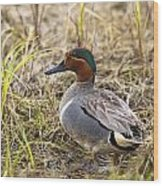 Greenwing Teal Wood Print