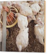 Hens Feeding From A Trough Wood Print