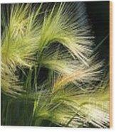 Hordeum Jubatum Grass Wood Print