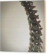 Human Spinal Bones Wood Print