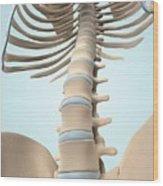 Human Spine Wood Print