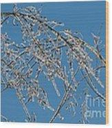 Ice Storm Poplars Wood Print
