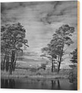 Infrared Picture Of The Nature Area Dwingelderveld In Netherlands Wood Print