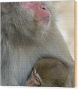 Japanese Macaques Wood Print