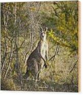 Kangaroo Wood Print