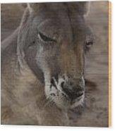 Kangaroos Wood Print