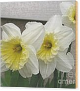Large-cupped Daffodil Named Ice Follies Wood Print