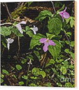 Large Flowered Trillium  Wood Print