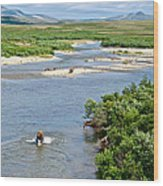 4-lay Of The Land Many Grizzly Bears In Moraine River In Katmai National Wood Print