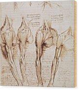 Leonardo: Anatomy, C1510 Wood Print