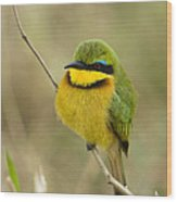 Little Bee-eater Wood Print