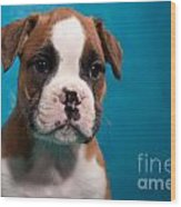 little Boxer dog puppy Wood Print