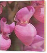 Lupine Named Gallery Pink Wood Print