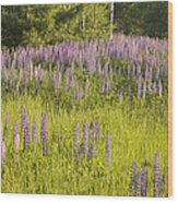 Maine Wild Lupine Flowers Wood Print