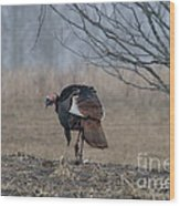 Male Eastern Wild Turkey Wood Print