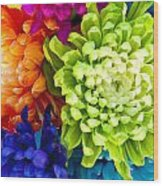 Multicolored Chrysanthemums  Wood Print