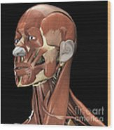 Muscles Of The Head And Neck Wood Print