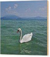 Mute Swan. Sirmione. Lago Di Garda Wood Print