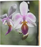 Orchids Dance Wood Print