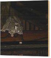 Possum Wood Print