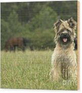 Pyrenean Sheepdog Wood Print