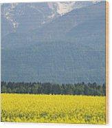 rapeseed field in Brnik with Kamnik Alps in the background Wood Print