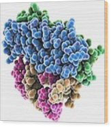 Rna Interference Viral Suppressor And Wood Print by Science Photo Library