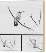 Ruby-throated Hummingbird - Immature Female - Black And White - Archilochus Colubris  Wood Print