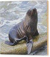 Sea Lion Wood Print by Alexey Stiop