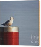Seagull Perched On Red Column Wood Print