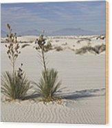 Soaptree Yucca In Gypsum Sand White Wood Print