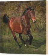 The Bay Horse Wood Print