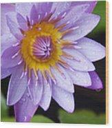 The Lotus Flower Wood Print