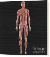 The Musculoskeletal System Wood Print