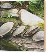 4 Turtles On A Log Wood Print